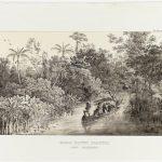 Exposição no Rio de Janeiro sobre Von Martius, pioneiro da Geografia no Brasil e no mundo